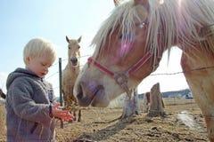 Young Child Feeding Horse on Farm royalty free stock image