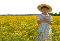 Young child in field of yellow flowers Royalty Free Stock Image