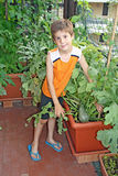 Young child on his orchard Stock Images