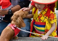 Young Child Japanese Festival Dancer and a Dog Stock Images