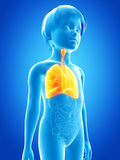 Young child - lung Stock Photos