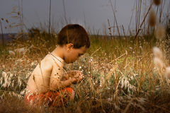 Young child in nature Royalty Free Stock Photo