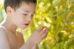 Young child in nature Stock Images