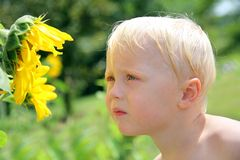 Young Child Outside Smelling Sunflower Royalty Free Stock Images