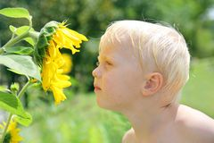Young Child Outside Smelling Sunflower Stock Photography