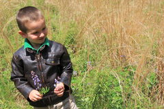 Young child picking flowers in the meadow Stock Photography