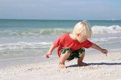 Young Child Picking up Seashells on Beach by Ocean Royalty Free Stock Photo