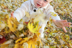Young Child Playing with fallen leaves in Autumn Stock Photography