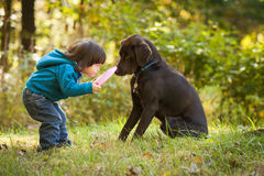 Young child playing fetch with dog. Young kid playing fetch game with dog and frisbee royalty free stock images