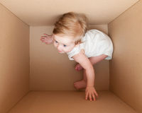 Young child plays in the box. Stock Photos