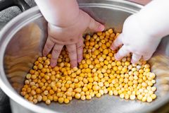 Young child`s hands picking up, playing with peas. Young child`s hands picking up, sort out and playing with yellow peas stock image
