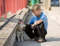 Little boy plays together with his puppy golden retriever dog outdoor at street, next to a red fence. royalty free stock photo