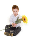 Young child and sunflower Stock Images