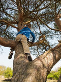 Young child tree climbing Stock Image