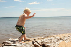 Young Child Walking on Beach. A toddler boy child is walking along some drift wood on the beach shore of Lake Superior Royalty Free Stock Photography