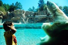 A child reacts to a polar bear`s roar stock photography