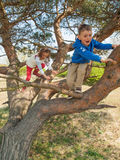 Young children climbing in a tree Stock Images