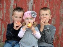 Young children eating apples Stock Image