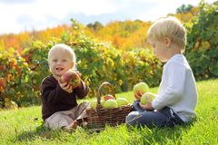Young Children Eating Fruit at Apple Orchard. Two happy young children, a little boy and his baby brother are sitting outside in the grass at an apple orchard in Royalty Free Stock Images