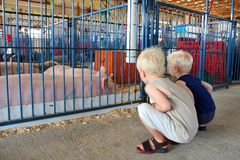 Young Children Looking at Pigs at County Fair. Two young children are looking at pink show pigs in a 4-H pen at an American County Fair Stock Images