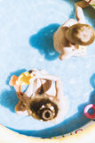 Young children playing with toys inside an inflatable pool Royalty Free Stock Image
