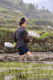 Young Chinese woman farmer standing knee-deep in mud, rice field Stock Image