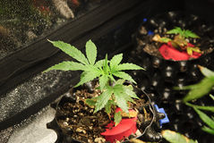 Young clones growing in soil Stock Images