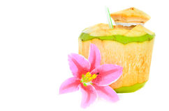 Young coconut Royalty Free Stock Image