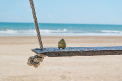 Young coconut on seaside swing with sand. Tropical beach background Stock Photo