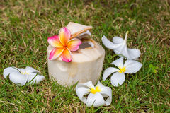 Young coconut water. With plumeria Stock Image