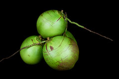Young Coconuts on Black Background. A stack of young coconuts isolated against a black background Stock Photography