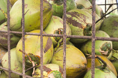 Young coconuts for sale kept in a security cage Stock Photo
