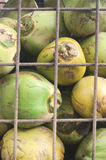Young coconuts for sale kept in a security cage Stock Photos