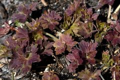 Young colored leaves. Close-up stock photos