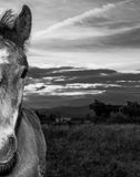 Young colt with dramatic sky in the background Royalty Free Stock Photography