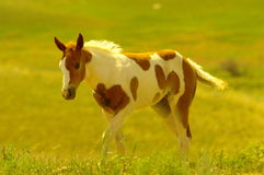 Young colts Stock Image
