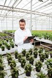 Young gardener working with plants in greenhouse. Young concentrated worker in apron holding folder and working with green plants in greenhouse Royalty Free Stock Photography