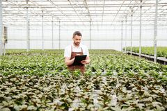 Young gardener working with plants in greenhouse. Young concentrated worker in apron holding folder and working with green plants in greenhouse Stock Image