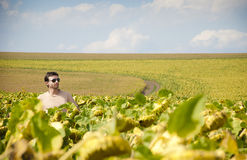 Young confident farmer in a sunflower field. A young confident farmer in sunflower field Stock Photography