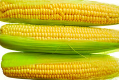 Young corn. Ear of fresh young corn on a white background Royalty Free Stock Image