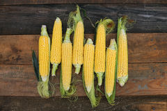 Young corn dairy ripeness, food varieties grown on an ecological farm. Away from the city, roads, factory emissions royalty free stock photography