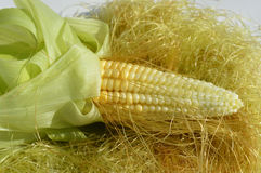 Young corn with leaves Royalty Free Stock Image