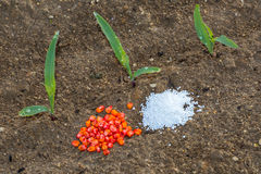 Young corn and seeds and fertilizers Royalty Free Stock Image