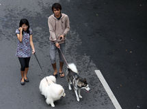 A young couple carrying dog peliharaanya in solo car free day a Royalty Free Stock Images