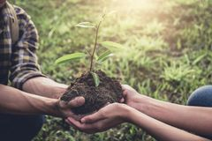 Young couple carrying a seedlings to be planted into the soil in. The garden as save world concept, nature, environment and ecology royalty free stock image