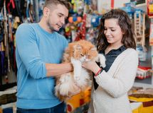 Young couple with cat in petshop royalty free stock photography
