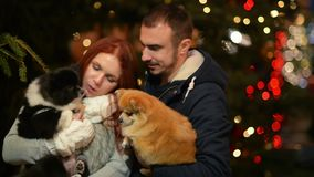 Young Couple with Caucasian Appearance Having Fun with the Couple of Dogs. Lights and Christmass Tree is On Background. People Cuddling with Yourself. HD stock video
