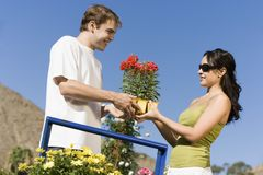 Young couple choosing potted flowers Stock Photos