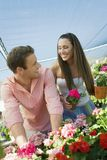 Young couple choosing potted flowers Stock Images