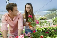Young couple choosing potted flowers Royalty Free Stock Photography